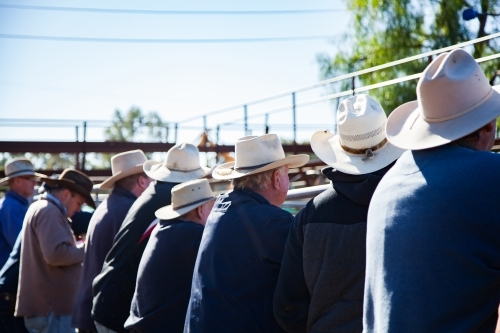 Farmers with hats leaning on cattle yard fence at sale yard