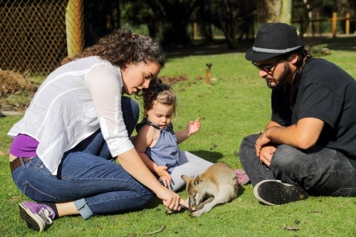 A couple in their early thirties and their two year old daughter pat a wallaby.
