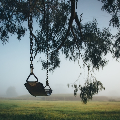 Chain and rubber swing hanging from a gum tree on a misty morning