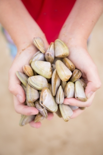 Child collecting cockles at the beach