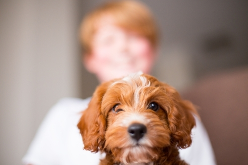 Child with Cavoodle puppy dog