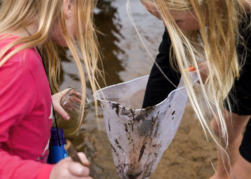 Children catching Tadpoles