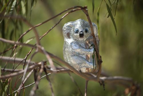 chocolate foil koala in gum tree