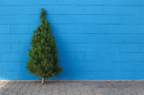 Christmas tree in front of blue brick wall