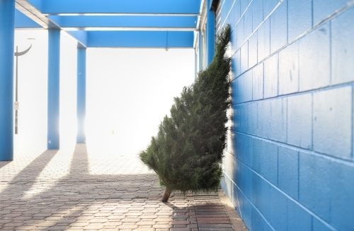 Christmas tree leaning against blue wall in morning light