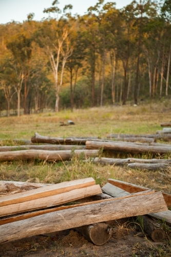 Split logs for fence posts on a farm