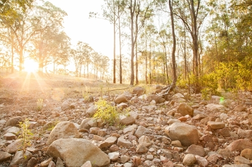 Gold sunlight shining over dry creek bed