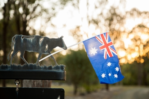 Cow sign beside driveway holding australian flag