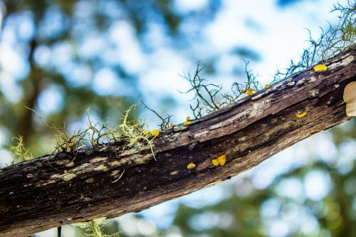 Close up of lichen and fungi growing on a branch