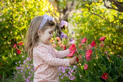 Little girl in the garden picking pink flowers