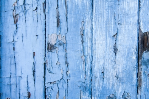 Flaking blue paint peeling off wood textured door