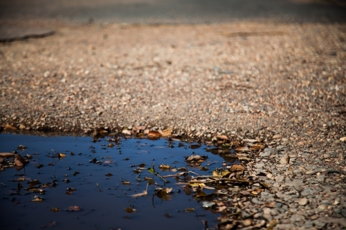 Leaves in a puddle on a gravel road