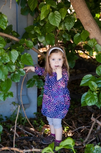 Little girl picking mulberries off the bush