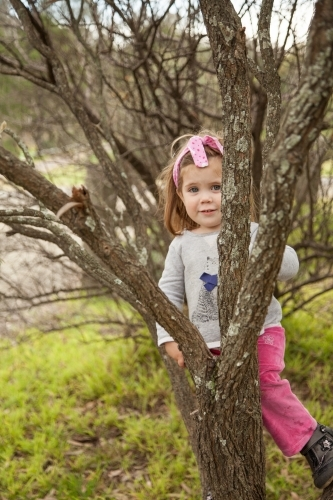 Smiling little girl climbing a tree