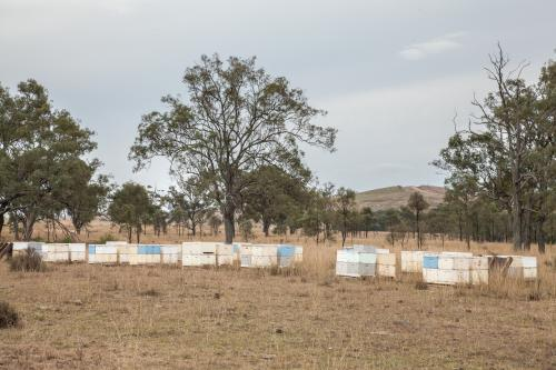 Pallets of beehives in a paddock