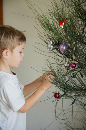 Young boy decorating a live Christmas tree