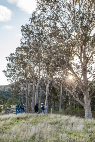 Group of bushwalkers hiking through a paddock at sunrise