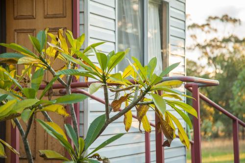 Frangipani tree outside a small self contained granny flat