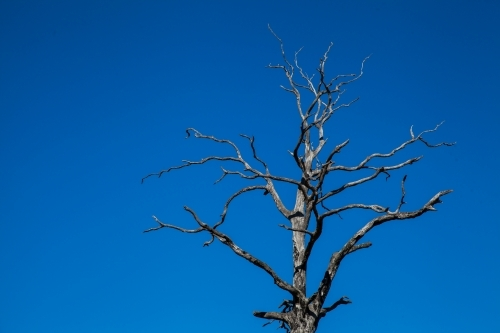 Branches of a dried tree reaching up to the clear blue sky