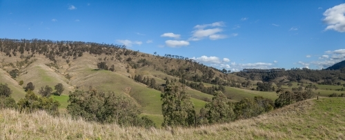 Panorama landscape of rolling hills and valleys with gum trees scattered through paddocks