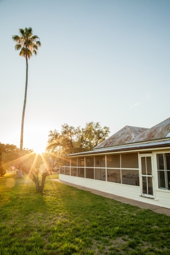 Golden light shining over rural homestead and palm tree