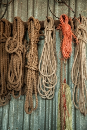 Old rope hung on the wall of a shed
