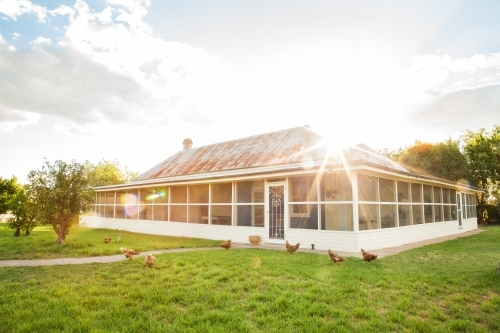 Free range chooks in front of country homestead on a farm