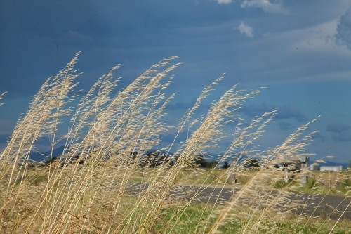 Long dry grass beside the road on a stormy day
