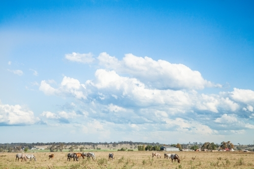 Herd of Appaloosa horses grazing in a paddock with a big sky