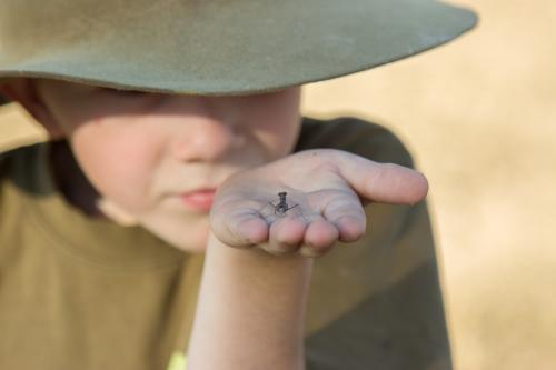 Young boy holding a praying mantis he has found