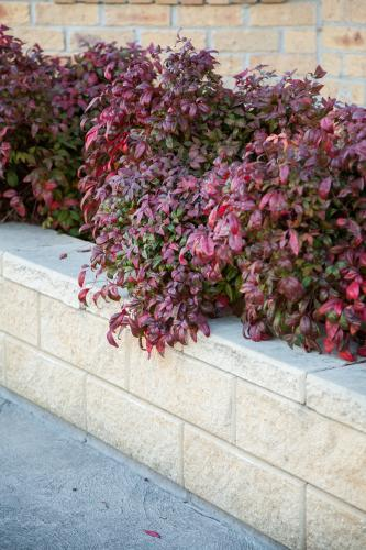 Red and green coloured bush next to white stone retaining wall
