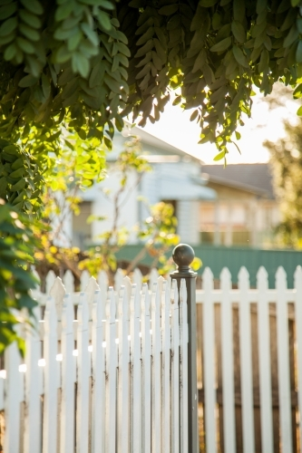 Tree overhanging white picket front fence of home