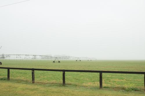 Irrigation system in a foggy paddock