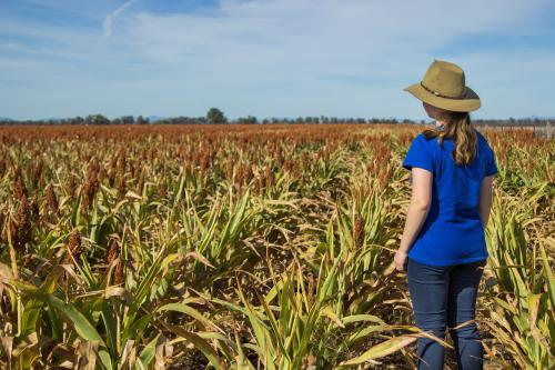 Farm girl standing in a paddock of sorghum