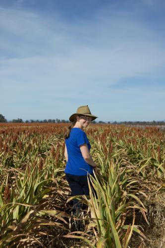 Country kid standing in a sorghum crop looking back at camera