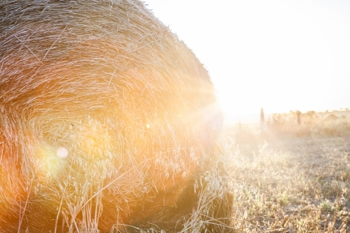 Sunlight shining over round hay bale in country farm paddock
