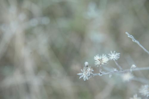 Ice crystals on a plant