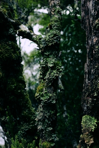 Close up of a moss covered tree
