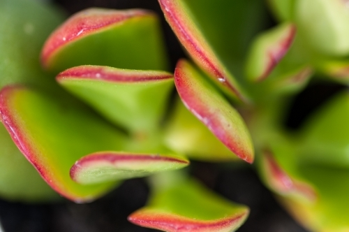 Close up of a succulent