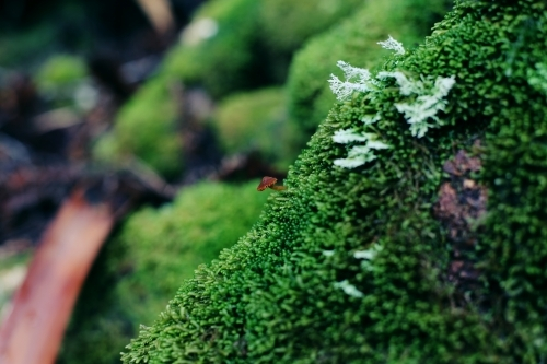 Close up of a tiny mushroom growing on moss