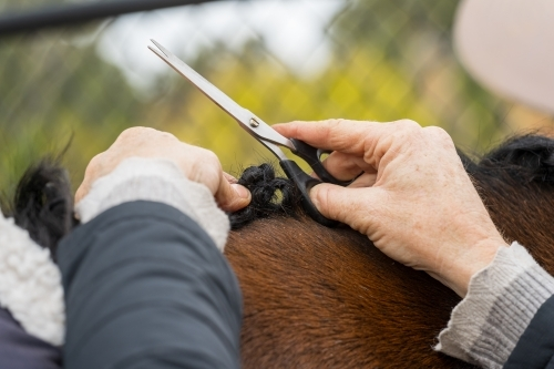 Close up of a woman's hands grooming a horses mane