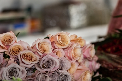Close up of beautiful pink and mauve roses with blurred background