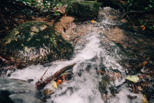 Close up of creek water in Mossman Gorge
