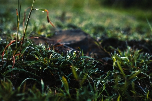 Close up of dew settling on the grass at dawn