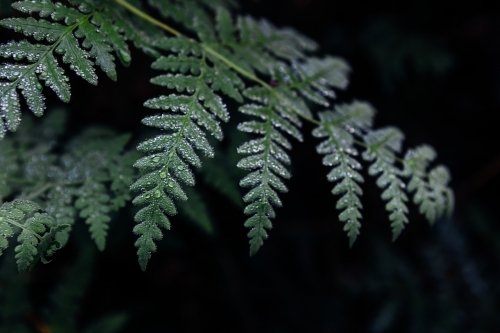 Close up of fern fronds in the rainforest