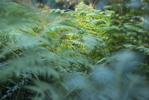 Close up of fern leaves in the undergrowth