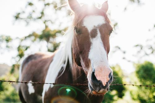 Close up of horse on a farm