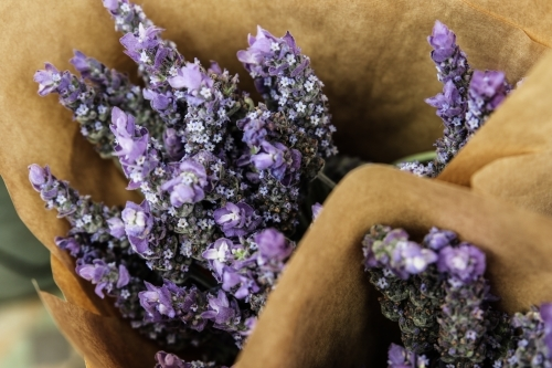 Close up of lavender bunch wrapped in kraft paper