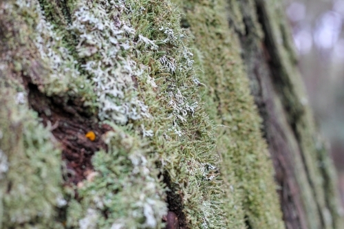 Close up of lichen on tree