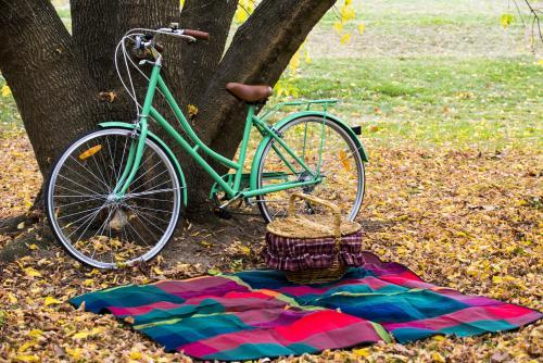 Close up of picnic blanket and green bike under tree with yellow autumn leaves